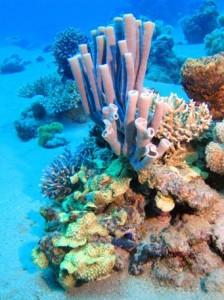 reefs.comCIN-AT-GOA2
