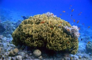 reefs.comCIN-AT-GOA3