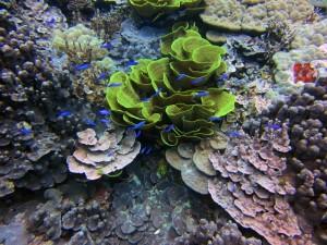 reefs.comCIN-ES-MI2