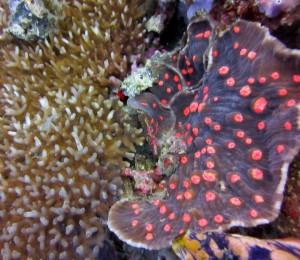 reefs.comCIN-ES-PNG