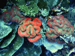 reefs.comCIN-ES-PNG3