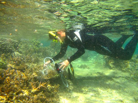 coral-gobies-5