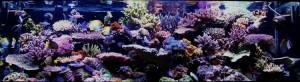 reefs.comCopps13