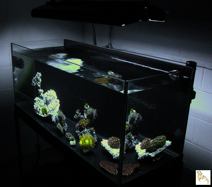Painting Fish Tank White