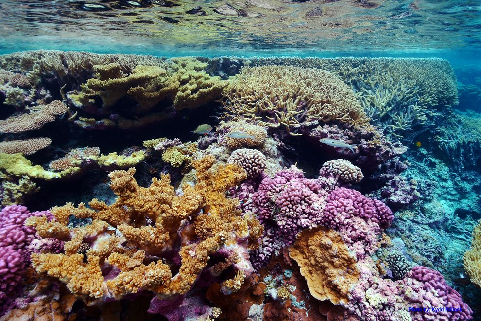 Palmyra Atoll National Wildlife Refuge is home to some of the most pristine coral reefs in the world.