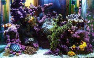 Aquarium tank public domain