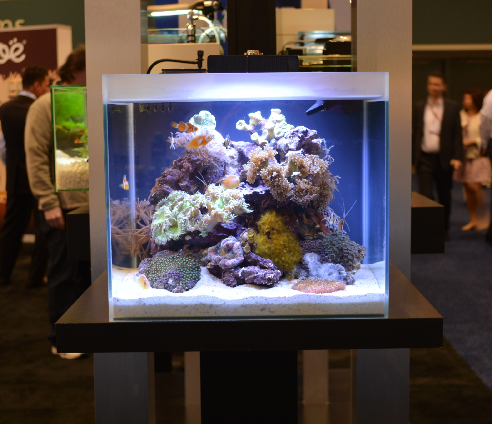 Fluval M-40 (15 gal) Desktop Reef Aquarium