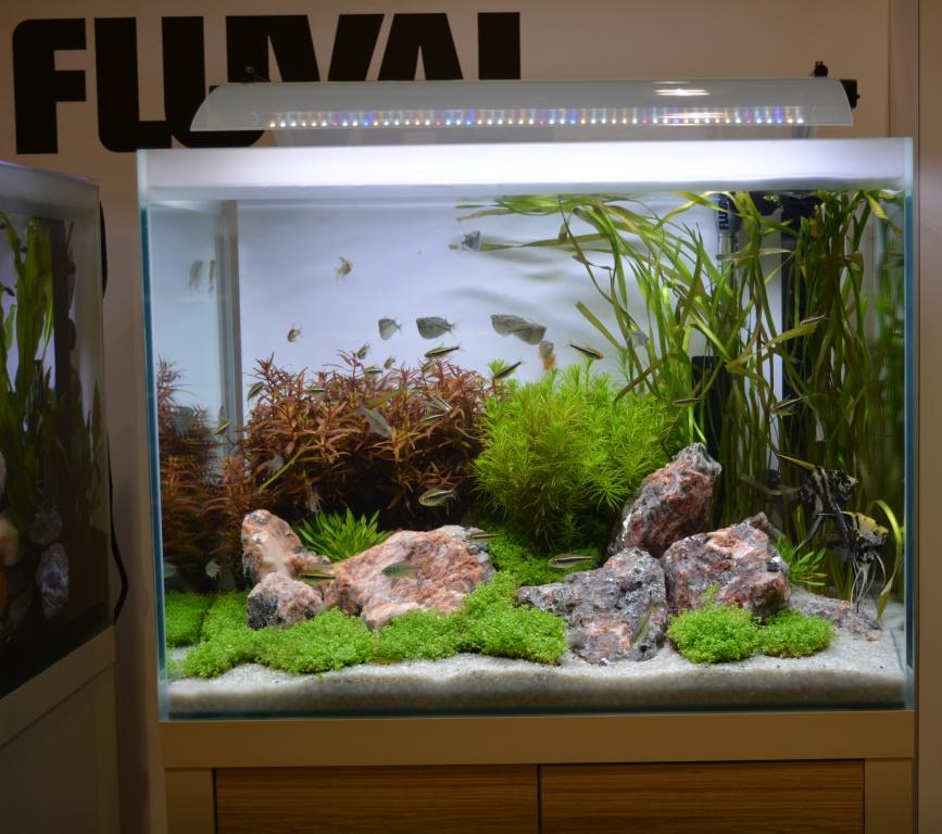 Fluval Unveils New Premium Freshwater Aquarium Series