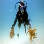 Fluval Donates To The Coral Restoration Foundation To Help Regrow The Rainforests Of The Ocean