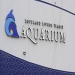 Loveland Living Planet Aquarium Sharks Getting A New Home