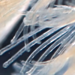 The Amazing World of Microscopic Pond Life Video