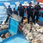 Dozens of Huge Tridacnid Clams Seized from Vietnamese Fishermen