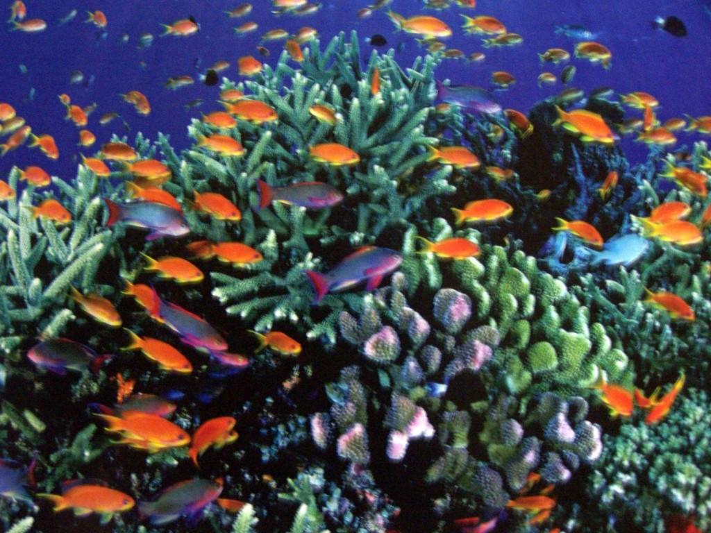 great_barrier_reef_australia_319850