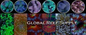 Global Reef Supply