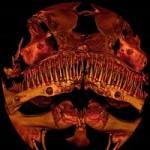 'Alien Catfish' Mystifies Scientists