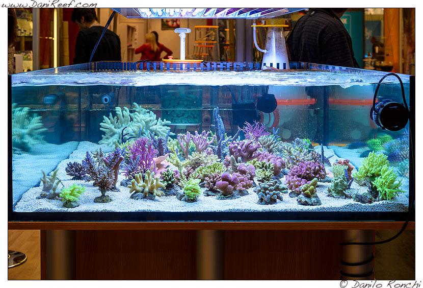 interzoo norimberga 2014 lo stand korallen zucht ed i suoi coralli