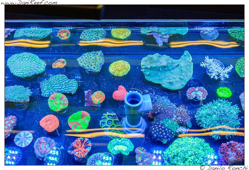 2014_05_interzoo_norimberga_2014_white_corals_003