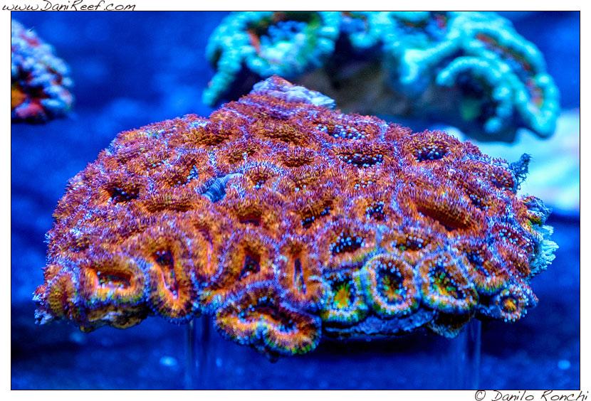 2014_05_interzoo_norimberga_2014_white_corals_009