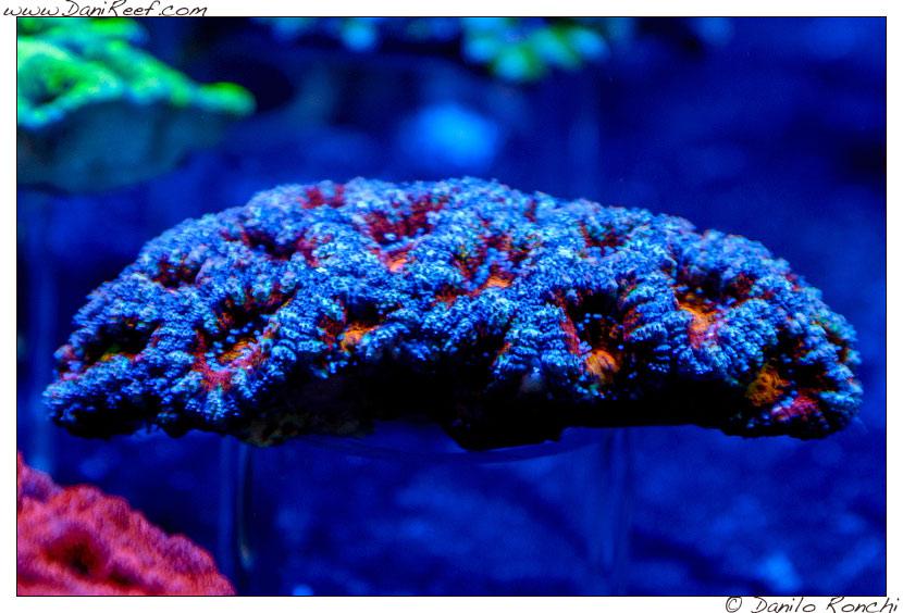 2014_05_interzoo_norimberga_2014_white_corals_011
