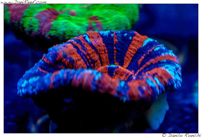 2014_05_interzoo_norimberga_2014_white_corals_014
