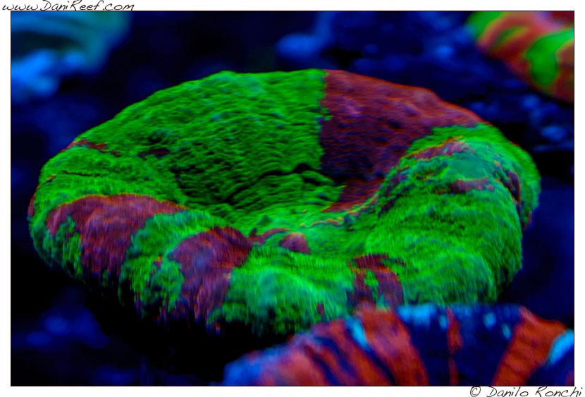 2014_05_interzoo_norimberga_2014_white_corals_015