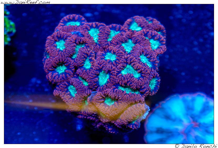 2014_05_interzoo_norimberga_2014_white_corals_025