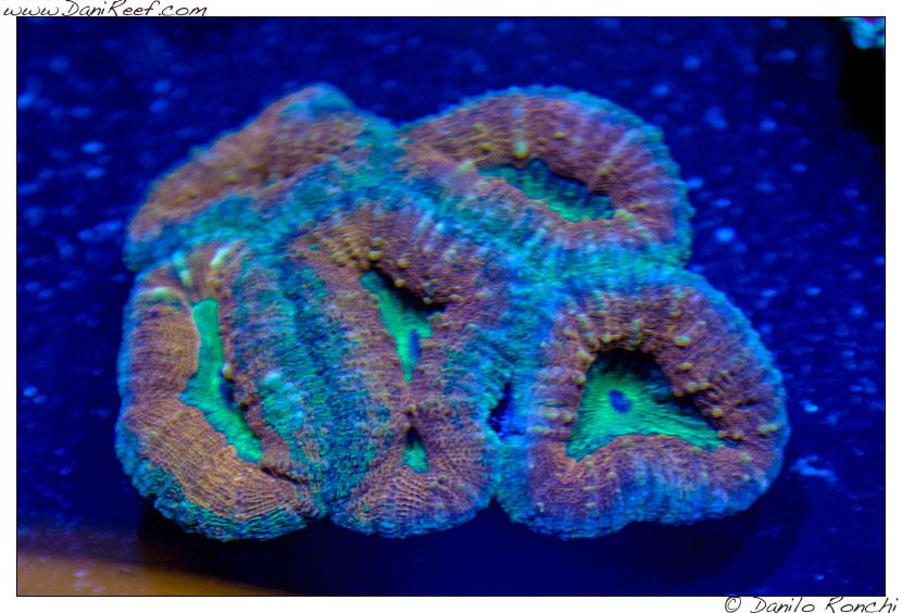 2014_05_interzoo_norimberga_2014_white_corals_028