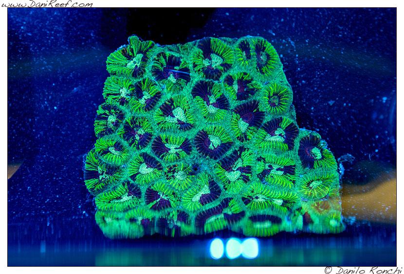 2014_05_interzoo_norimberga_2014_white_corals_034