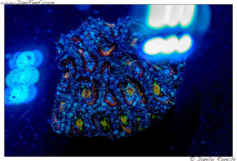 2014_05_interzoo_norimberga_2014_white_corals_035