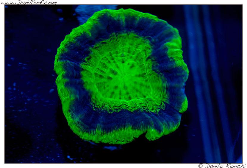 2014_05_interzoo_norimberga_2014_white_corals_036