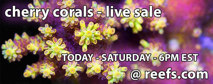 cherry-corals-live-sale
