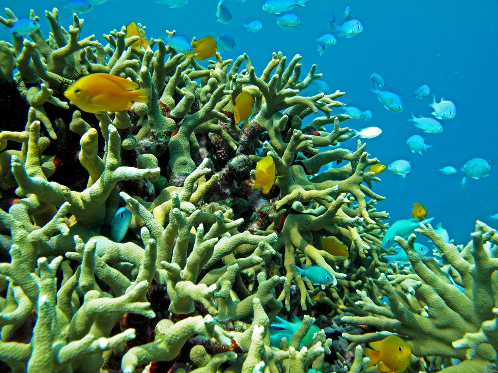 fish_coral-1024x767