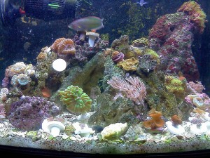 reefs.comMBGMC2