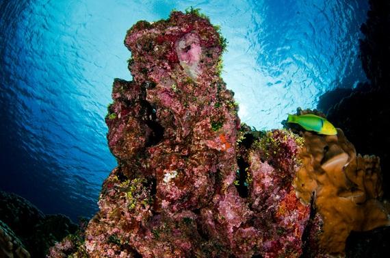 world ocean day 1