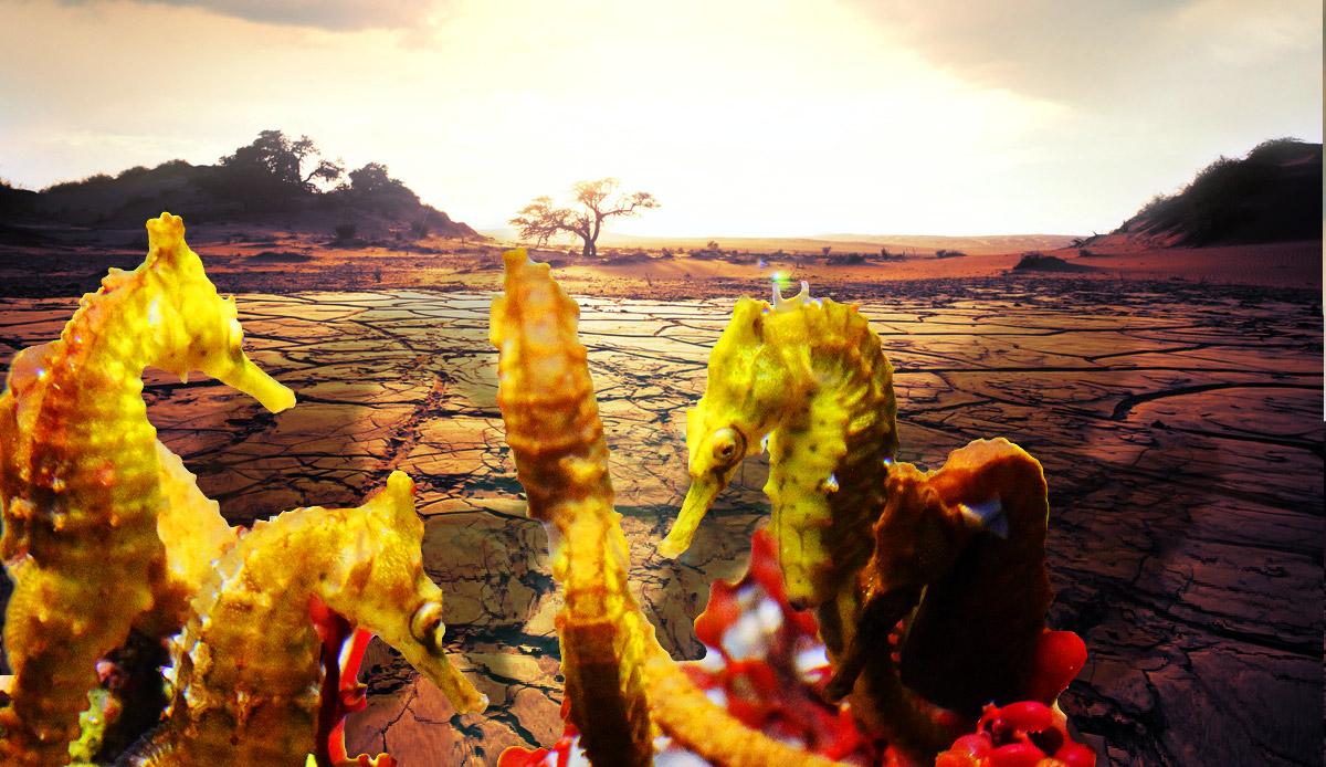 Hot-Seahorses-Desert
