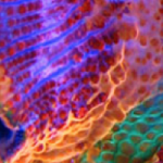 """Super Schroom"" Mushroom Coral from Sexy Corals Leaves Us Speechless"