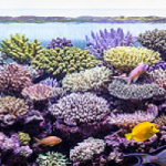 Pietro Romano's Incredible Marine Aquarium