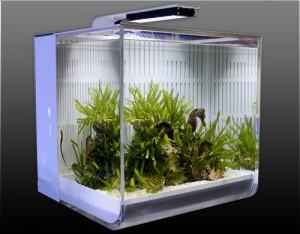 Seahorse aquarium
