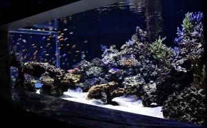 reefs.comCoppsUpdate