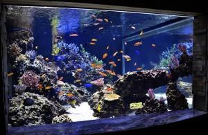 reefs.comCoppsUpdate2