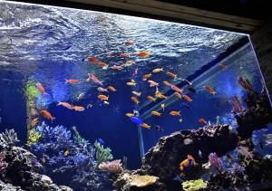 reefs.comCoppsUpdate3
