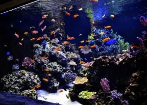 reefs.comCoppsUpdate4