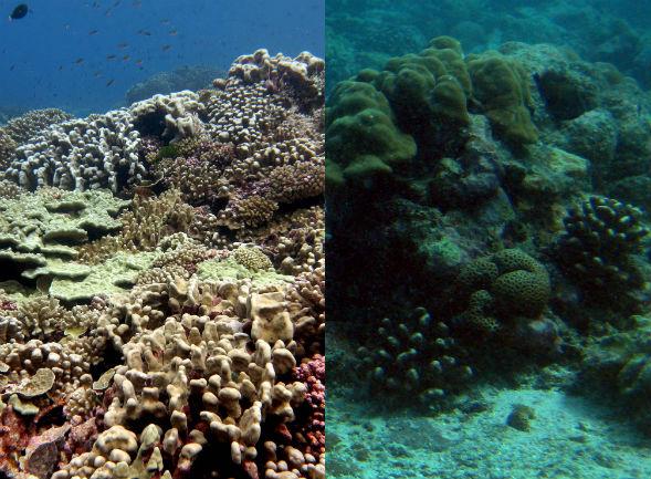 Coral_algae_reef