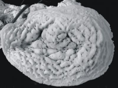 saudi coral 2
