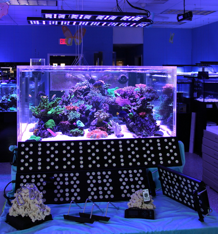 I remember the excitement about ten years ago when LEDs first came on the  market for reef aquariums. The