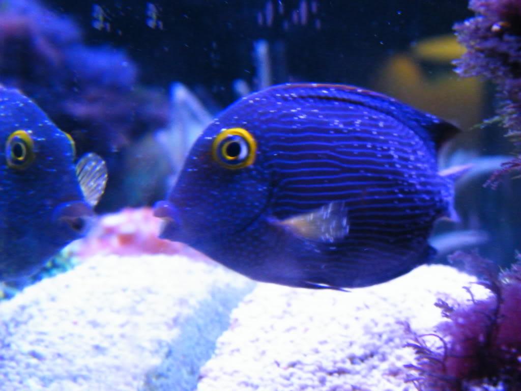 Saving Fish – Reefs.com