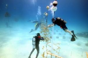 Hanging-corals-2