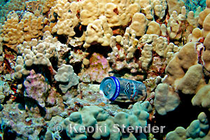 beer-can-coral-2