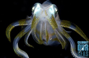 Alien Squid