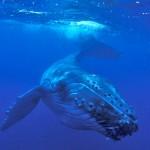 whales-745x495